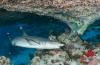 Leendert Smit - Een trip naar de Rode Zee (1)
