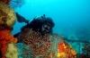 Aruba: paradijs voor wrakduikers