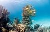 Belize neemt historisch besluit: permanent geen olieboringen
