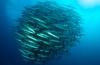 Speciale beursaanbieding van Seaquest Dive Center: Cebu en Bohol