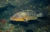 Cindy Weterings - Onderwaterfilm maken - mijn nieuwe hobby?