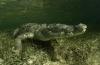 Daan van Schaik - In het water met krokodillen