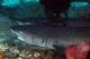 Wouter Hoogerwerf - Van Makassar tot mantis shrimp (5)