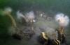 Dirk Van den Bergh - Op zoek naar anjelierenvelden en steenslijmvisjes