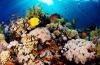 Lentespecial bij Diving Holidays