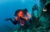 In beeld: Ghost Fishing-missie in Malta
