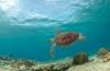 Steven Stegeman - Curaçao 8: Nog een keer schildpadden!