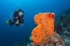 Welke regels gelden er in Bonaire National Marine Park?