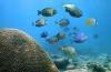 Steenkoralen Sint Maarten ernstig bedreigd