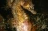 Eduard Bello - Zeepaardjes