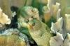 Bonaire fotowedstrijd 2018 - Shortlist Onderwaterleven