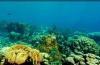 Caribische koraalriffen hard achteruitgegaan in 40 jaar tijd