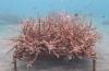 In beeld: Het koraal is gegroeid!