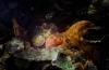 Onderwaterkunst van Elspeth Diederix