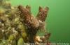 Exoten zijn het thema tijdens ONK en ZK Onderwaterfotografie
