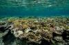 Trilhaardiertjes bedreigen koraalriffen