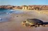 Schildpadden in Oman