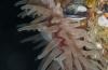 Ad Aleman - Heel veel zeedahlia's