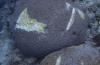 Schade aan Curaçao's rif in beeld gebracht