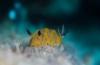 Petra Smit - Een duik in het avontuur