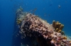 Aruba: drie favorieten van Jeffrey Kost