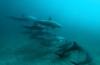 Joost Boerman - Freediving met dolfijnen