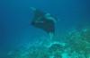 Diana van den Heuvel - Manta op Bonaire
