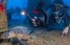 Nieuw: Weefine, Sealife DC2000 en Hugyfloat