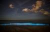 Zeevonk weer te zien in Zeeland: fototips!
