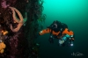 Techduiken met Black Marlin – opleidingen voor beginners en gevorderden
