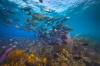 Belize – 'We zien je snel weer'