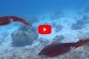 Cindy Weterings – Pijlinktvissen, veel pijlinktvissen!