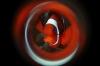 Kijkje onder water – Clownvissen