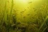 Duikgebied Zandeiland 4 vrijgegeven, duiker nog niet gevonden