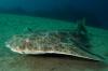 #Najaar2021 – Lanzarote met Diving World