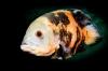 Zomerse workshops onderwaterfotografie voor alle niveaus