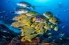 Ocean Art 2020 – stuur nu je foto's in!