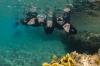 Moederdag – Welke duikende/snorkelende moeder zet jij in het zonnetje?