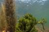 Vijf weetjes over zeewieren