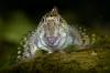Aaibare steenslijmvis – Het verhaal achter de foto