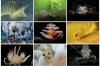 Workshops bij Onderwaterhuis.NL: nog plaatsen vrij vóór de zomervakantie