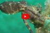 In beeld: Het macroleven van Noord-Sulawesi