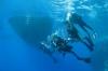 Renate Manders – Duiksafari met Stichting Gehandicapten Duiksport Fun Diving