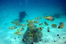 REEFolution – een revolutie in koraal- en visproductie