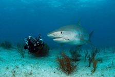 In beeld: Sharks, Predators of the Ocean