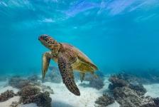 Joost Boerman – Vliegende schildpad