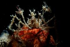 John Landa – Eindelijk weer eens een duik en een duikreport