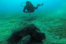 Carla van Westing – Ander soort duikvakantie