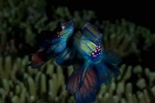 Sandra Boerlage – Van koraal tot walvishaai