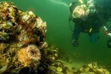 John Landa – Een duikje met collega's